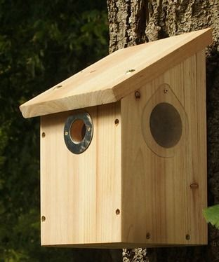 'Nutbags Own' Camera nest box