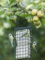 Suet cake feeders