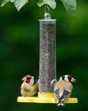 Goldfinch taster
