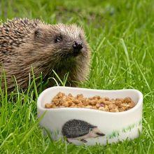 Hedgehog bowl