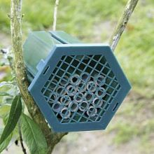 Red Mason Bee nest
