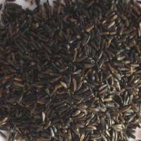 Niger Seed Per Kg