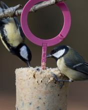 """""""EASY PEASY"""" SUET VARIETY PACK OF 3"""