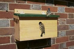 House Sparrow terrace nest box