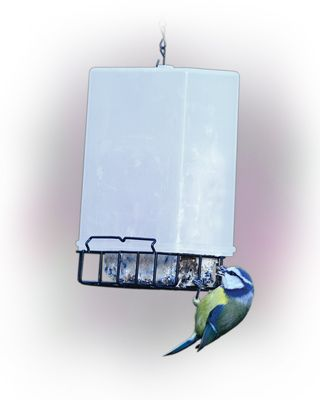Starling resistant suet cake feeder