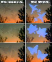 Window Alerts-Maple Leaf
