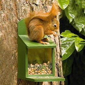 Squirrel Feeder(wooden)