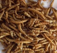 Freeze dried Mealworms 100g